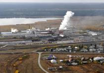 Алтайские свекловоды обеспечивают бесперебойную работу Черемновского сахарного завода